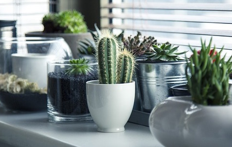 Three benefits of office plants