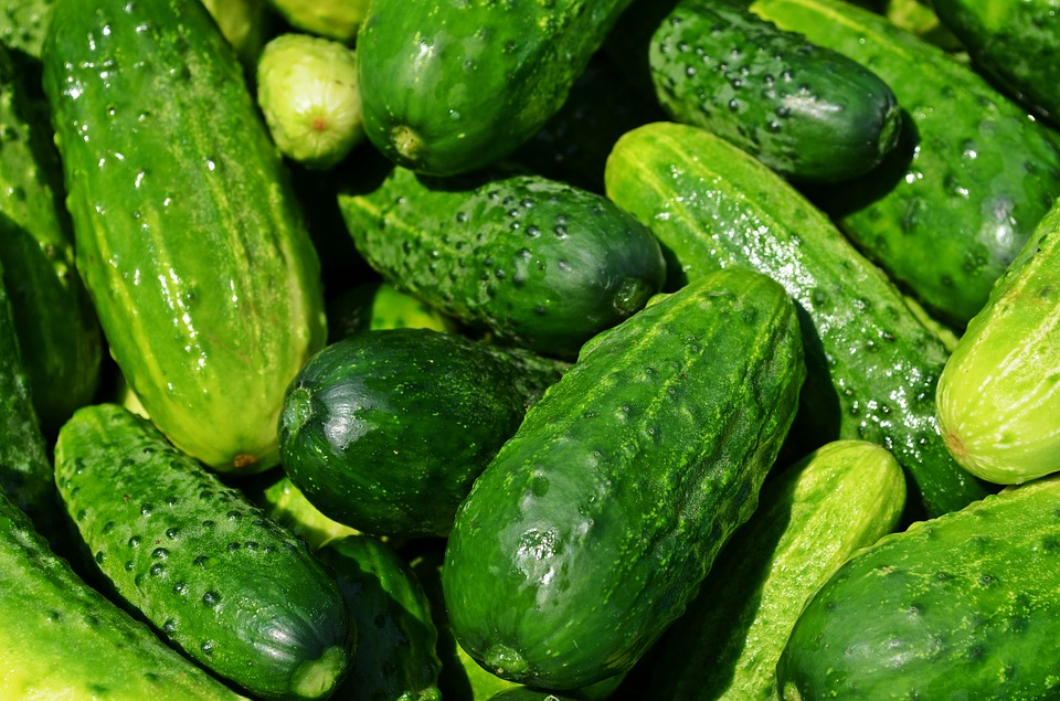 Kooky About Cucumbers!